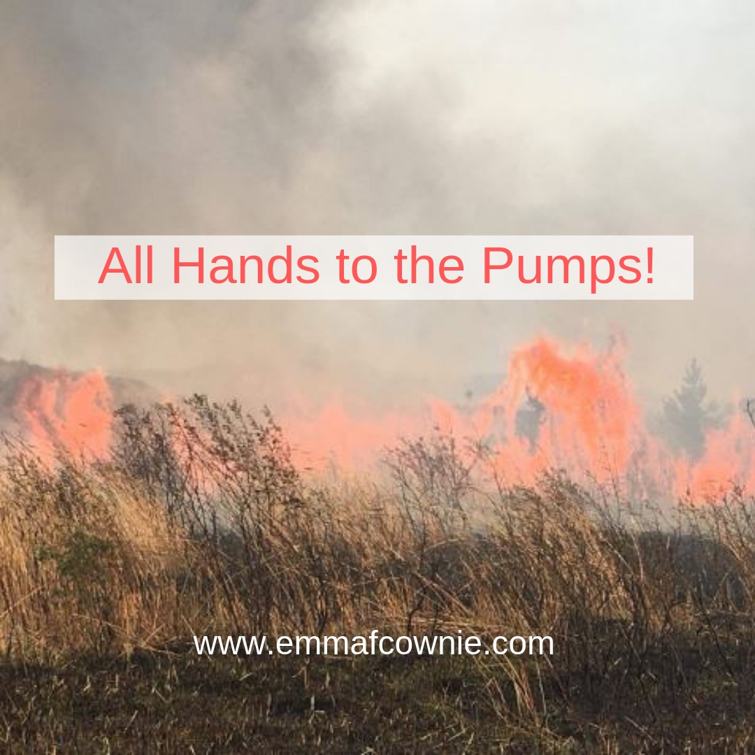 Blog about gorse fires