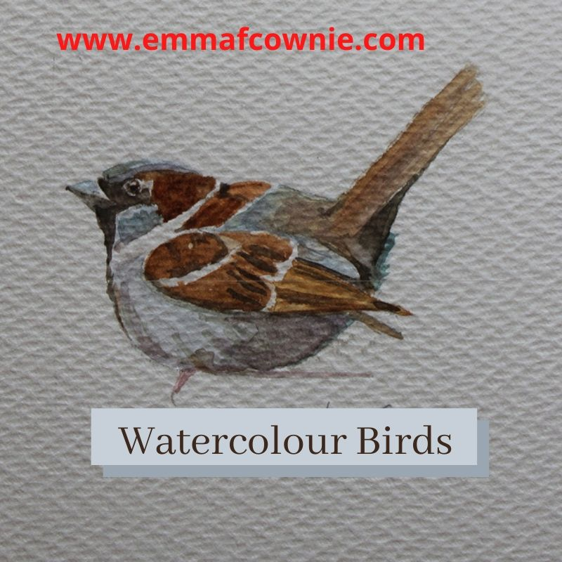 Watercolour painting of a sparrow by Emma Cownie